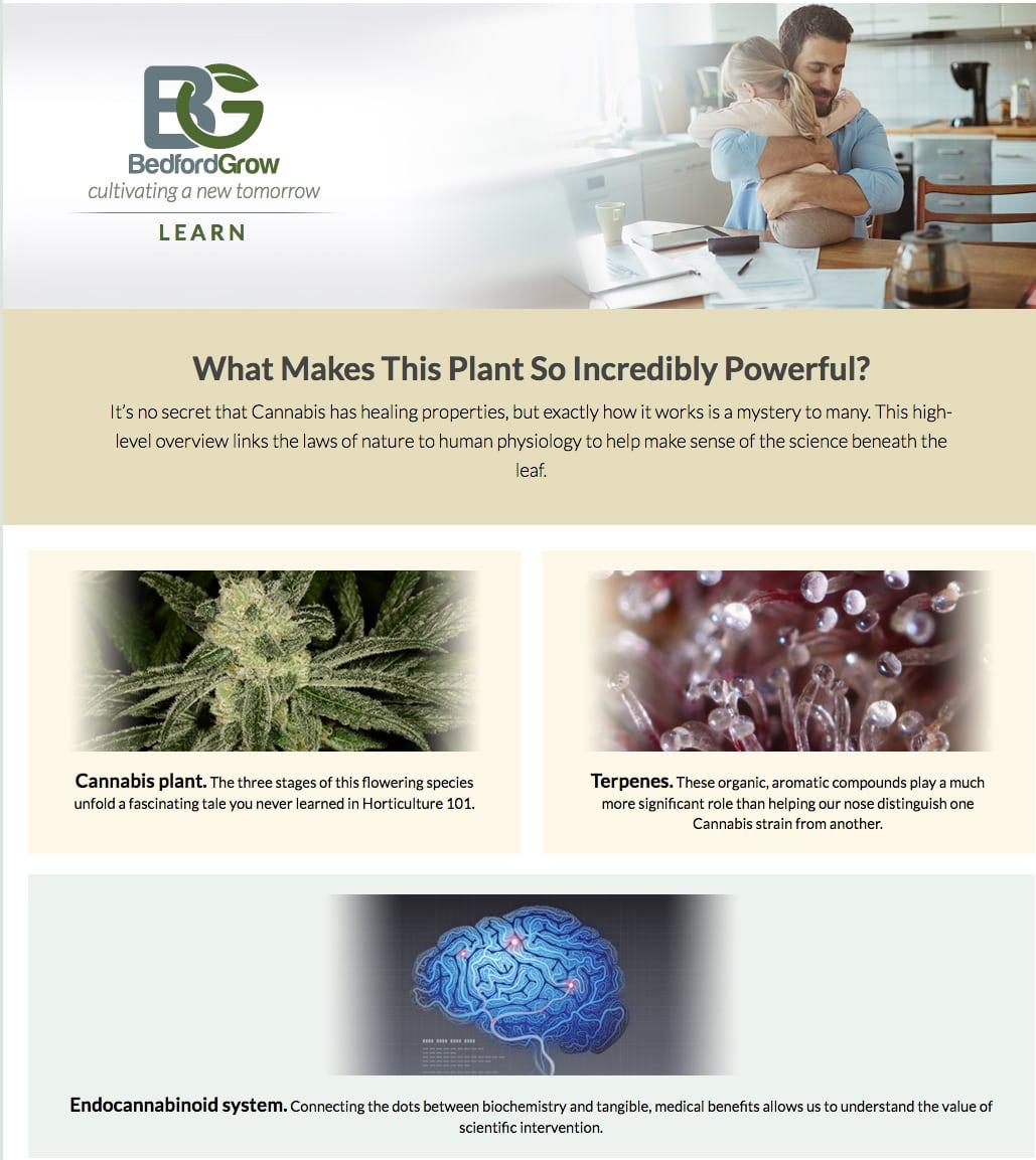 Cannabis digital content